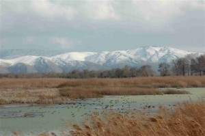 Aammiq wetland in winter
